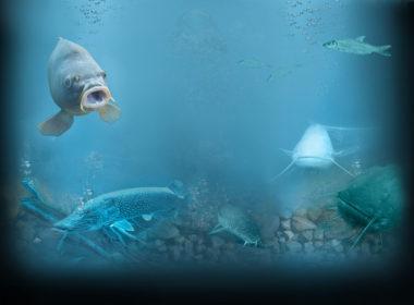 Znázornenie privlastňovania si rýb od 01.01.2019